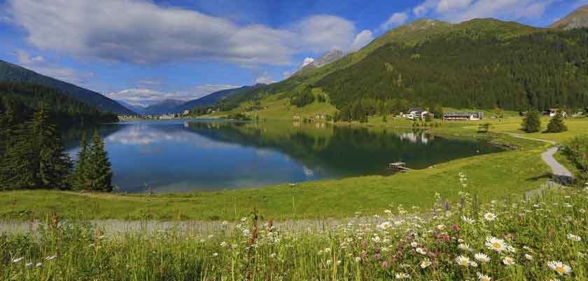 switzerland_graubuenden-region_davos_lake-wild-flowers.jpg